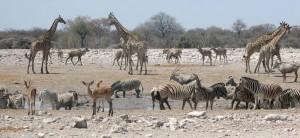 animals drinking water
